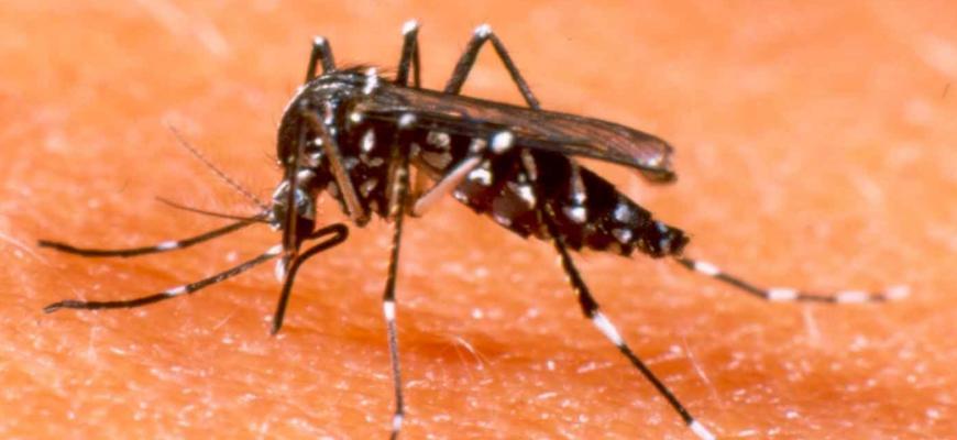 Zika, Chicungunya e Dengue.