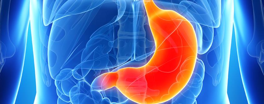 ilustração renderizada do estômago humano